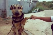 大皮,give me five!