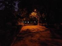 夜色下的林荫道-坚果手机随手拍