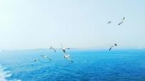 我们在蓝色海上飘