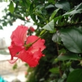 花啊啊啊啊啊